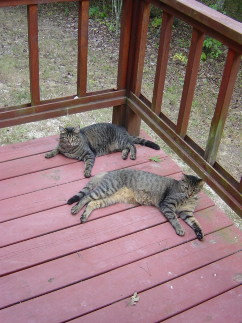 Belial (back) and Jimmy (in front) on the porch of the Mountain Springs Road cabin circa 2004.