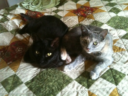 Within two weeks, Oki and Grendel were close friends.