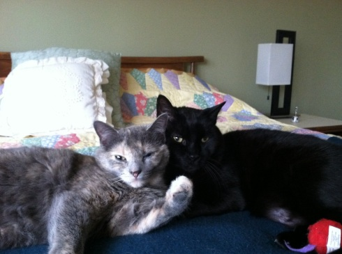 Oki says, so long for meow.